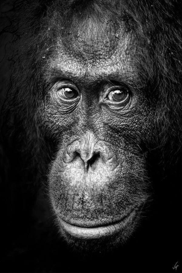 Wild Borneo by Ferran Vega
