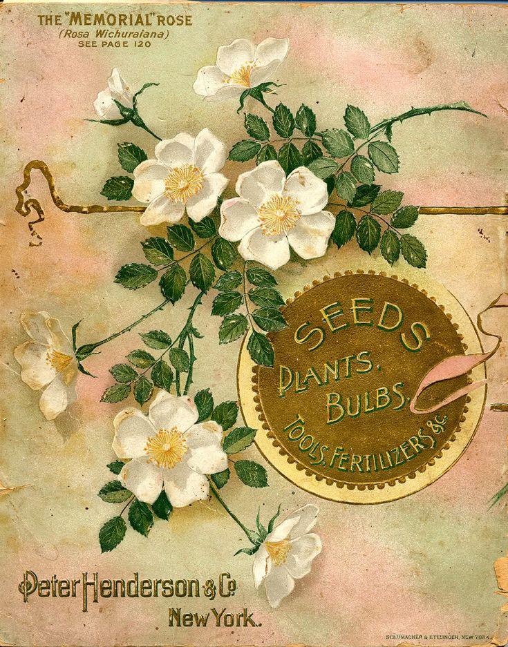 Vintage seed packet  - drawing of flowers