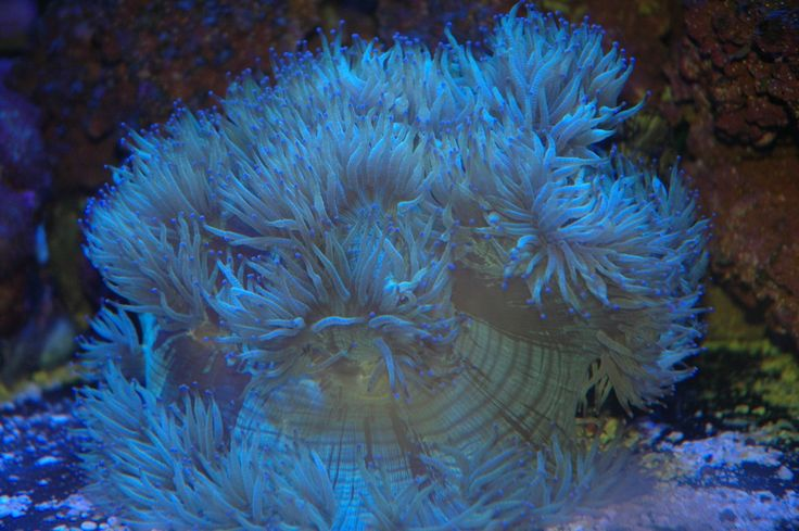 Fiji recife de coral Tanque em Kula Wild Adventure Park