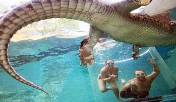 La «jaula de la muerte»: 15 minutos en el agua con un cocodrilo gigante (Video)
