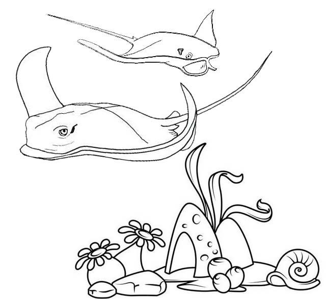 Stingray Coming Near To Coral Reefs Coloring Page