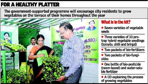 Vegetable farming hits the rooftop