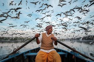 Galería de fotos. The Guardian.  https://www.theguardian.com/travel/picture/2017/apr/20/travel-photo-of-the-week-a-sky-full-of-siberian-seagulls-in-delhi
