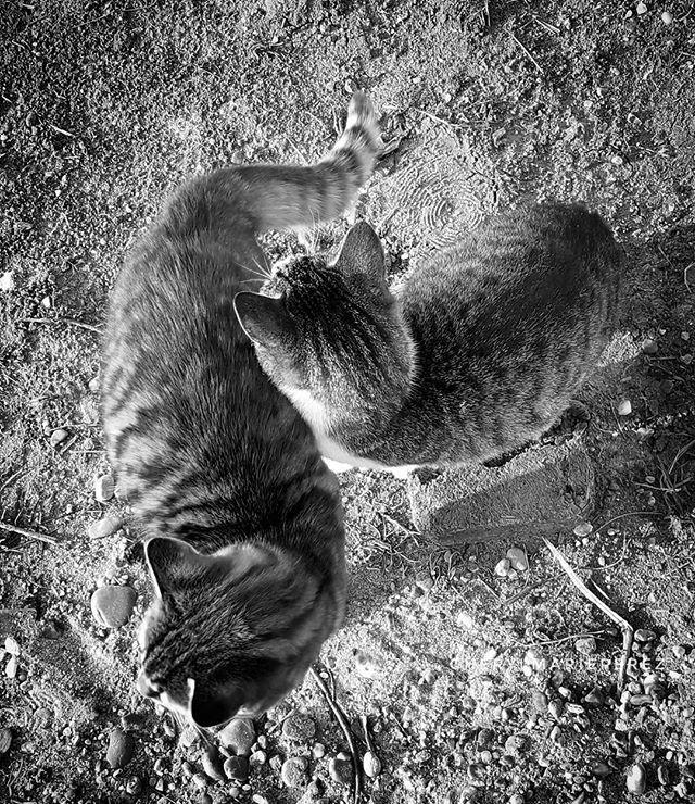 Two.  #caturday #cats #catagram #catsandgreece #catsofinstagram #bnw_cats #bnw_life #bnw_planet #bnw #bnw_captures #bw_society #bw_captures #bw_greece #bnw_of_our_world #bnw_rose #bnw_just #allshots_bw #nature_greece #princely_bw #bnw_one #team_greece #tea_journals #hikaricreative #hartcollective #monochrome #blackandwhitephotography #mobilephotography #greece #catsofgreece #iglovers_greece