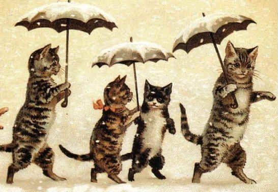 Cats with umbrellas