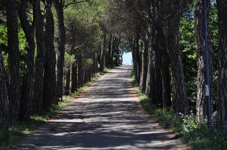 Campobasso - Molise - Italy