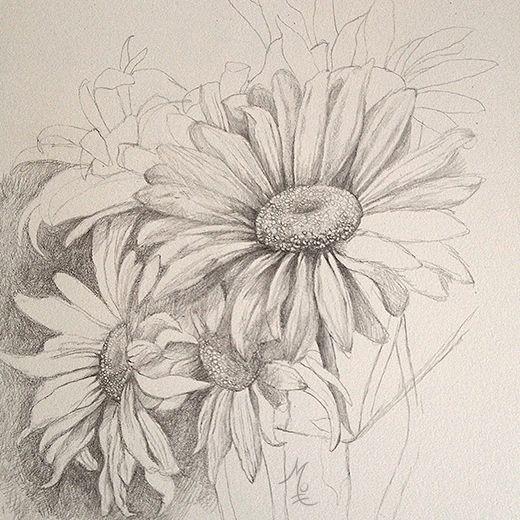 17 best ideas about Daisy Drawing on Pinterest | Daisy art ...
