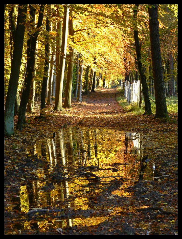 Niepołomice Forest in October