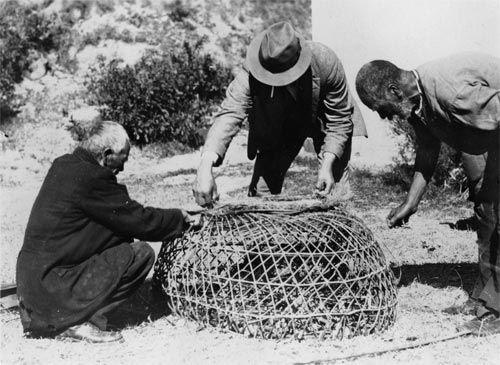 Measuring a crayfish pot