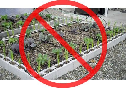 A Warning About Cinder Block or Concrete Masonry Gardens