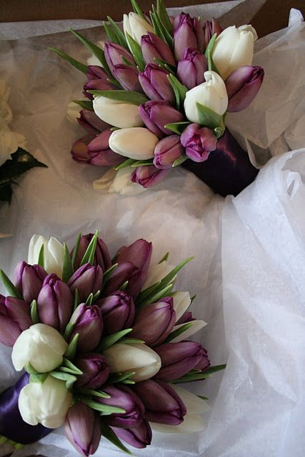 Gorgeous eggplant-colored tulips