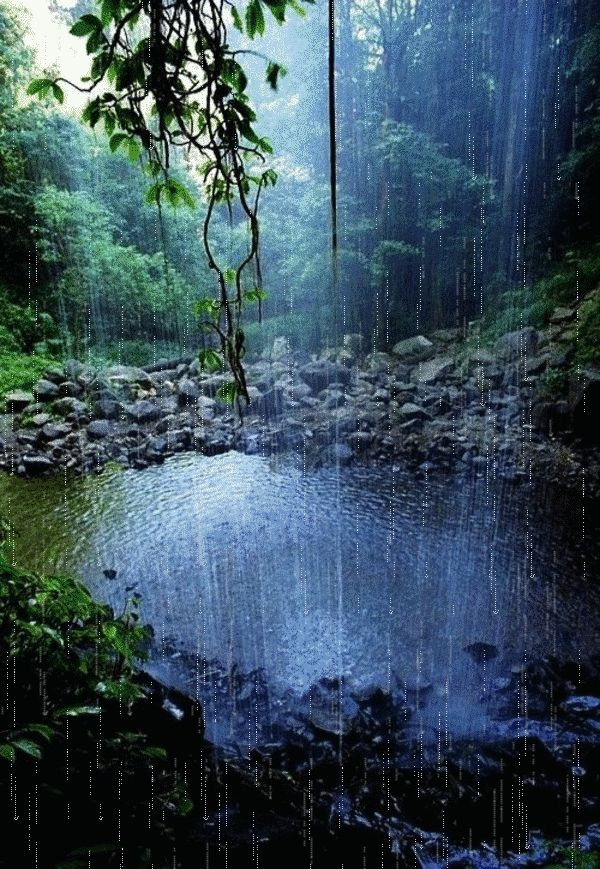 Beautiful forest scene with rain falling over the water.
