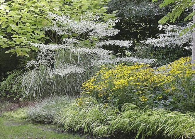 17 meilleures id es propos de plantes d 39 ombre sur pinterest jardin ombrag plantes d 39 ombre. Black Bedroom Furniture Sets. Home Design Ideas