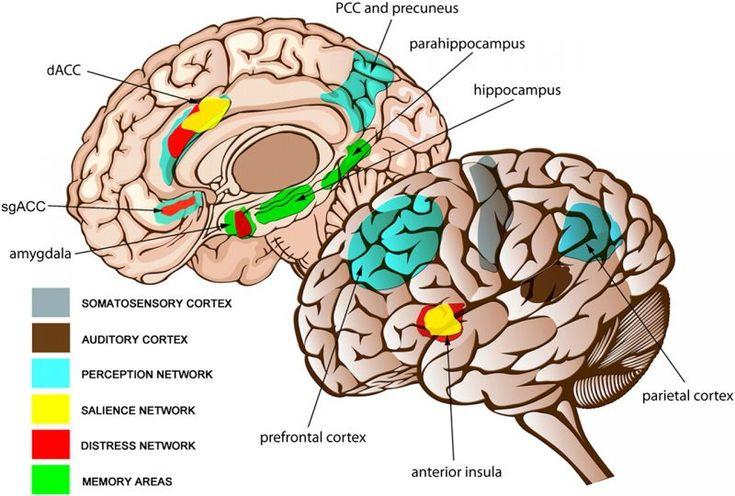 Mejores 7 imágenes de neurosciences en Pinterest | La anatomía del ...