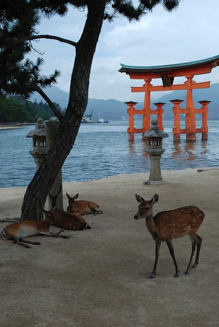 Island of Miyajima, an island in Japan which is basically a tourist hotspot for the Japanese.  These sacred deer wonder around and beg for food (by nodding), the whole place is deer crazy; you can get photos taken in booths with pictures of deer on them, deer frequent all parts of it, deer figures are rife and the island also has a huge mountain, complete with cable cars and angry monkeys.