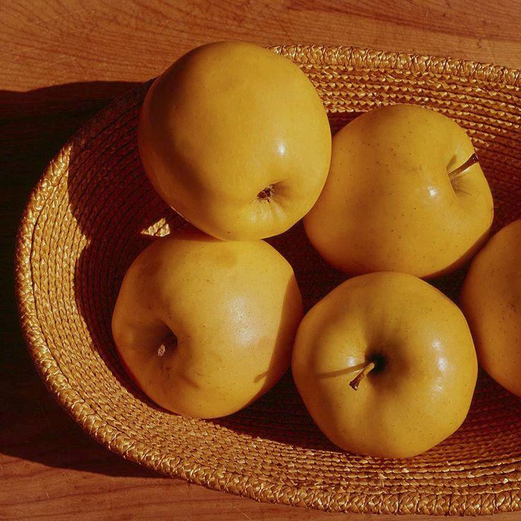 Apples, Toronto, Ontario, 1976