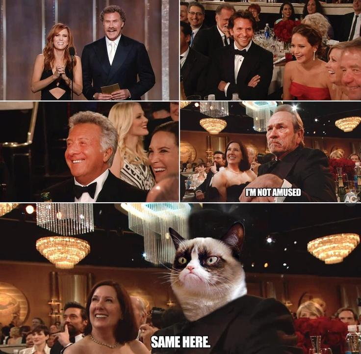 25 Best Memes About Tommy Lee: 386 Best Images About Grumpy Cat....Yeah! On Pinterest