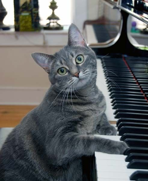 Cute little kitty cat :-)
