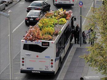 Student Marco Antonio Castro Cosio bedacht dat meer uit groene daken te halen moest zijn en ontwierp als afstudeerproject een eco-groendak voor de bus.