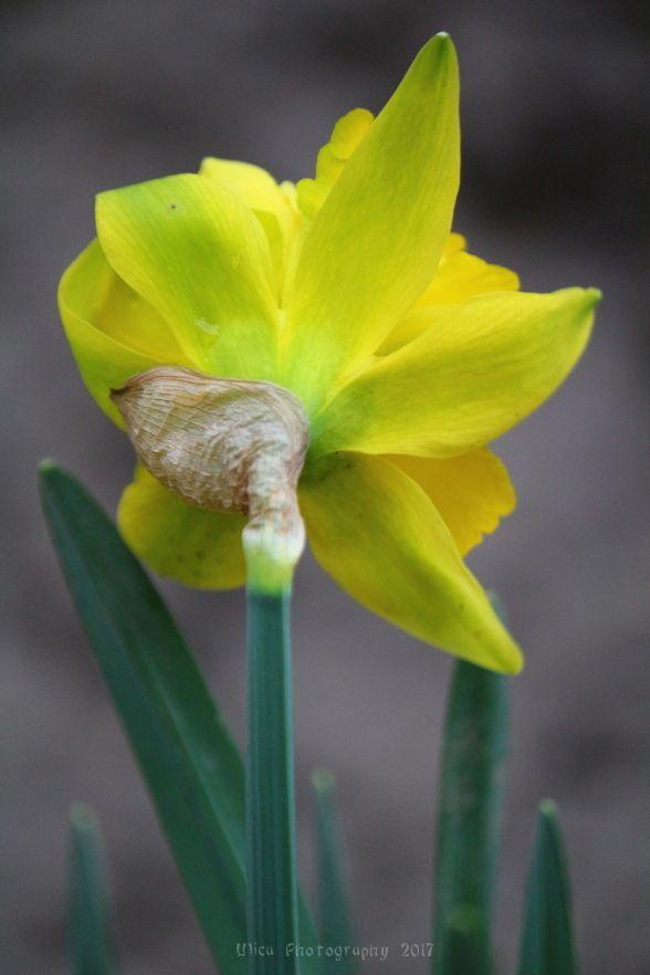 """Where flowers bloom so does hope."" ~ Lady Bird Johnson"