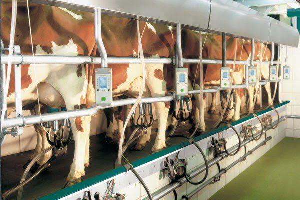 Sempre piu' studi stanno dimostrando che il latte aumenta il rischio di malattie degenerative alle ossa, depositi di calcio nelle arterie, allergie e quant'altro. Ovviamente, visto che abbiamo bevuto il latte per migliaia di anni senza problemi, la colpa e' sempre nostra per come alleviamo gli animali e la produzione. Dovete sapere che la pastorizzazione distrugge tra le tante cose, un enzima chiamato fosfatasi che consente l'assorbimento del calcio. #fosfatasi #lattecrudo #latticini