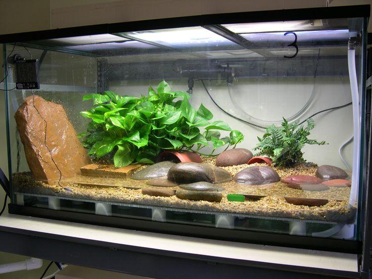Classroom Aquarium Ideas ~ Best images about habitat on pinterest aquarium setup