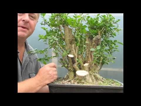 Very cool transformation of a hunk of stump into a cool bonsai.  I love Graham Potter
