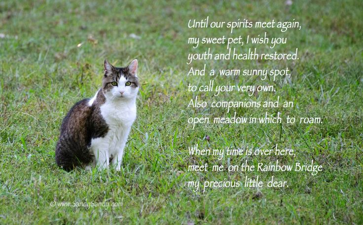 Until We Meet Again : A beautiful sentiment that's intended to help bring peace to those who have lost a very special Friend ~~ Click on the pick to access more pet-themed In Memoriums from my Facebook page. (I am so sorry for your loss)
