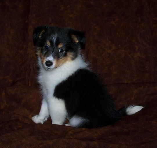 Dog Adoption Bartlett Il