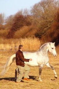 Fantastic free lungeing in unfenced nature - Klaus Ferdinand Hempfling and Lippizaner stallion Ferdinand