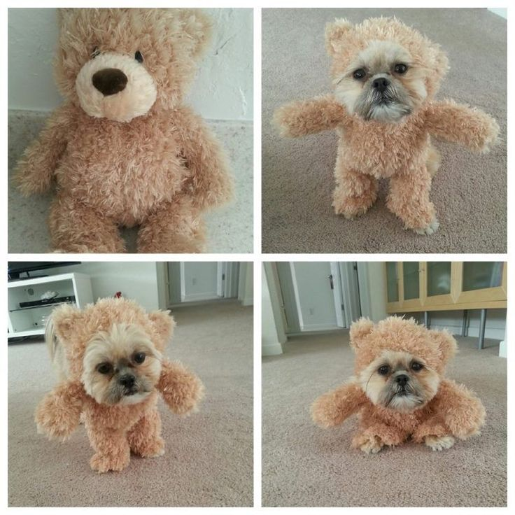 how to make a walking teddy bear costume for your dog - Halloween Costume For Small Dogs