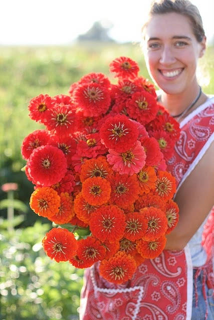 Zinnias from the talented Erin of Floret Flower Farm!