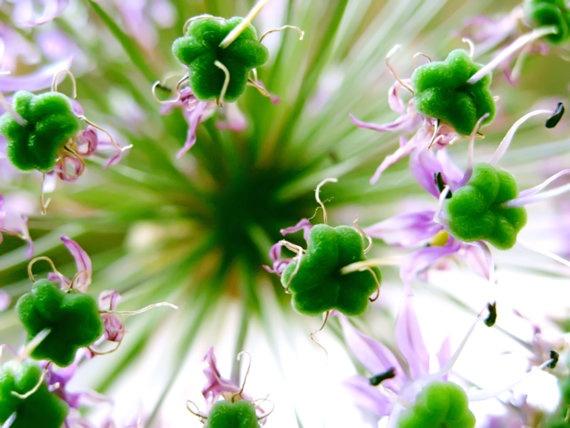 Sweetheart - Macro Flower Photograph via Etsy