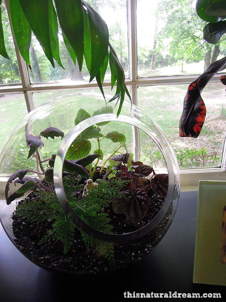 terrarium-and-a-Buddha