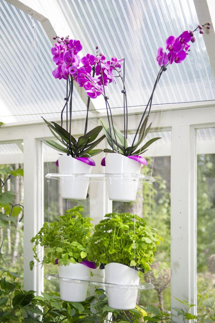 Biolan Ilo growing set. Hanging rack with pots. It is possible to place as many as three hanging racks one on top of the other. http://www.biolan.fi/suomi/puutarhaharrastajat/huonekasvituotteet/ilo-kasvatussarja
