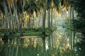 Image result for kerala nature beauty malayalam