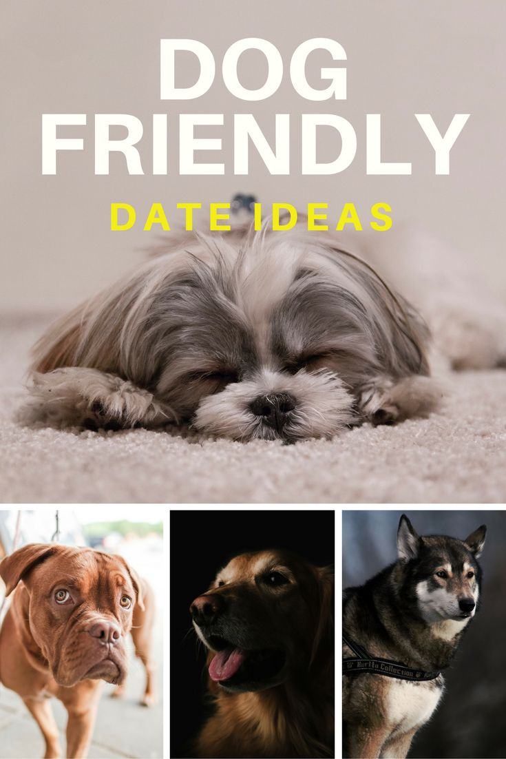 8 Dog-Friendly Date Ideas For When You Don't Want To Leave Your Dog At Home