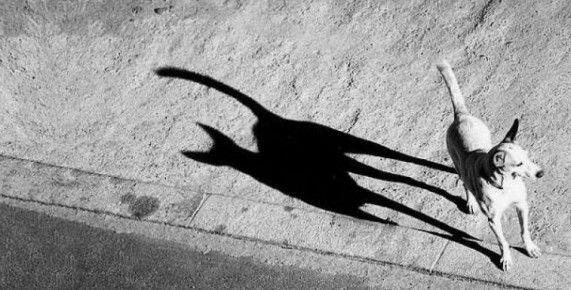 Quando i giochi d'ombra stravolgono le fotografie ScuolaZoo