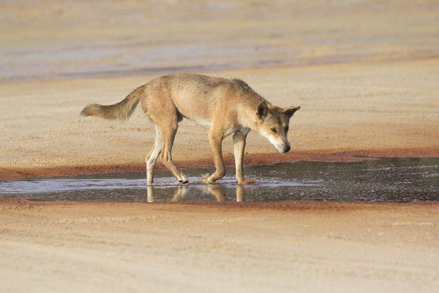 Jabiru Swamp, Fraser Island - Great Sandy National Park, Queensland