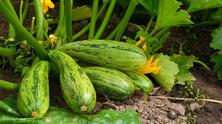 Garden chores for month of June - The San Diego Union-Tribune