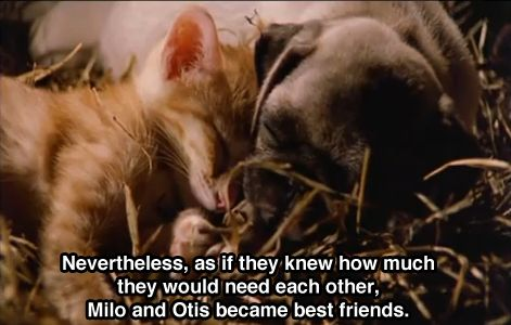 Milo and Otis: I'm going to make sure my kids see this movie
