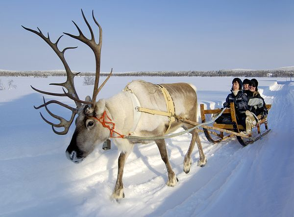 A reindeer sleigh ride in Lapland, Finland:  Experience the frosty thrill of gliding through the snow-covered forest in a reindeer-drawn sleigh at northern Finland's Jaakkola Reindeer Farm. Located near Luosto in the Finnish province of Lapland, the family-owned farm offers a variety of reindeer safaris and tours led by English-speaking guides. Many tours include opportunities to...*Click for more,