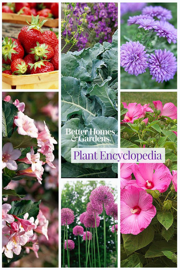 Our plant encyclopedia is a valuable tool for new and experienced gardeners. Browse by plant name or zone and get helpful tips on care. Plus, get design tips and uses for different types of plants, shrubs, flowers, and more.