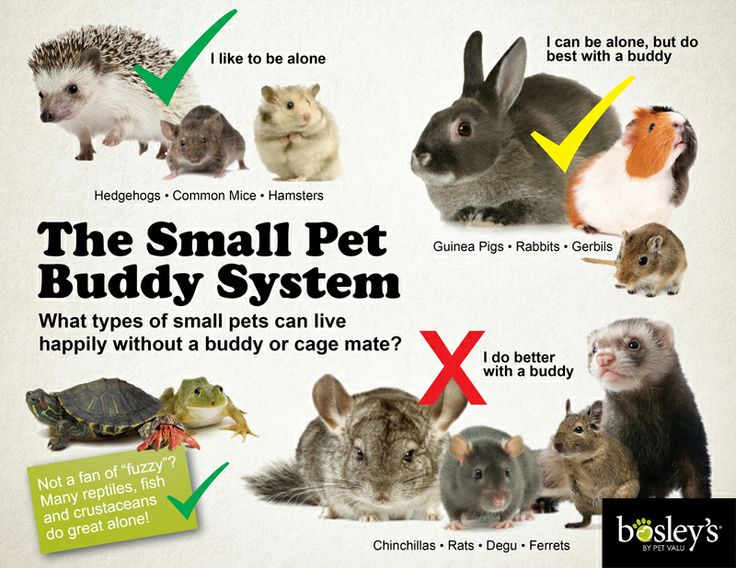Many small pets are social animals, meaning they get