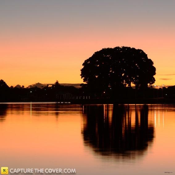 Iconic Mandurah tree #CaptureTheCover entry - by Jo in Perth's Rockingham & Mandurah Region.
