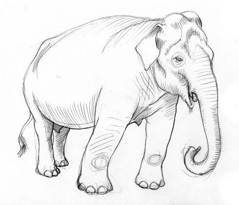 Schets olifant, een schets is een niet uitgewerkte tekening. Deze schets van de olifant is een schets om dat de tekening nog niet helemaal is uitgewerkt.