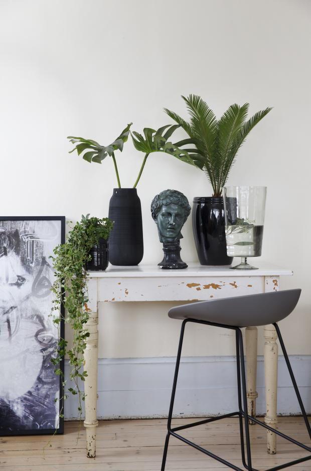 planter, bregner, palmeblader