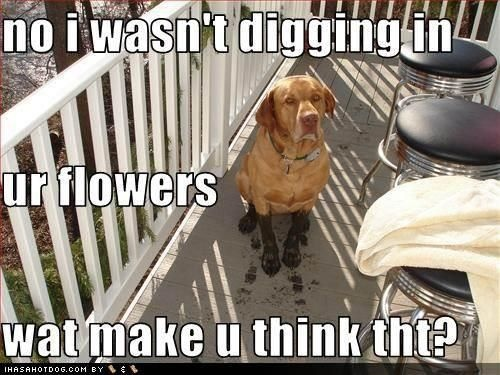 How To Get Ur Dog To Stop Digging Holes