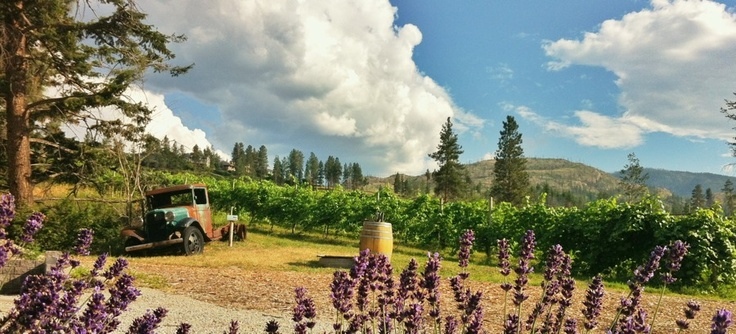 Kelowna Winery Tour.  iPhoneography with iPhone 4. trevor brucki