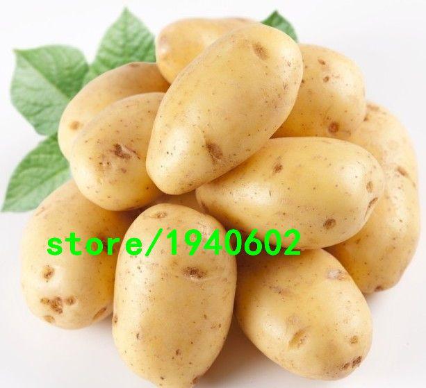 Картофель юкон золото аккуратный желтый - кожурой и желтый - мякотью картошку фрукты и семена овощных культур для дома сад 100 шт. + подарок